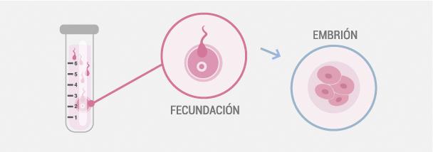 Cultivo de embriones y fecundación