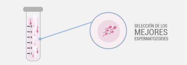 seleccion de los mejores espermatozoides