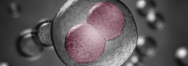 Embryo culture up to the blastocyst stage