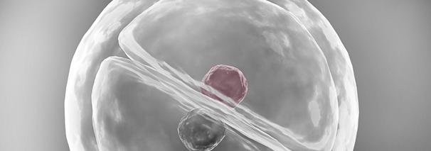 embryoscope