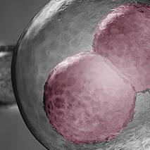 Cultivo de embriones hasta blastocisto